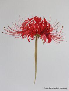 Fiore rosso, fiorisce la pittura acquerello, stampa da originale, arti…