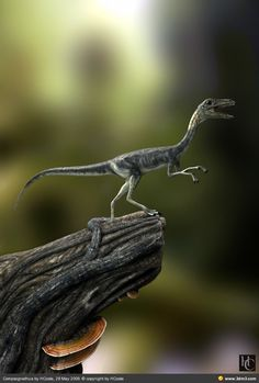 """Compsognathus - Greek for """"pretty jaw."""" About the size of a chicken or turkey, it is one of the smallest known dinosaurs."""