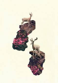 Albino Deer² by misspaq, via Flickr
