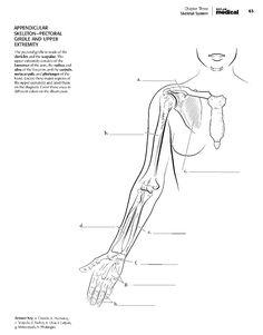 Kaplan Anatomy Coloring Book.pdf | boudli | Pinterest | Best ...