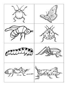Kleurplaten Van Insecten.40 Beste Afbeeldingen Van Insecten Kleurplaten Coloring Books