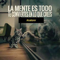 OJO❗️ TE conviertes en lo que CREES‼️más no en lo que quieres ok❓ #oemarketing #catonr