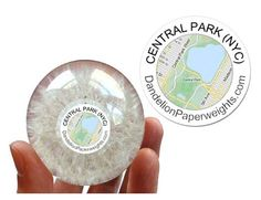 """""""The Central Park Weed"""" - NYC Inspired Dandelion Paperweight – Dandelion Paperweights"""