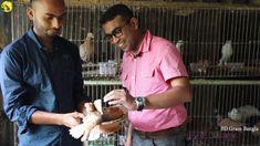 কবুতর পালন কিভাবে মাসে ৫০ হাজার টাকা  উপার্জন সম্ভব | Profitable Pigeon ... Color Of Life, Pigeon