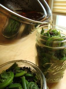 Pickled Fiddleheads