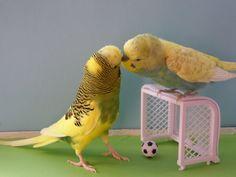 Ablenkungsmanöver beim Fußball spielen - es wird gekusselt und der Ball ..... :o))