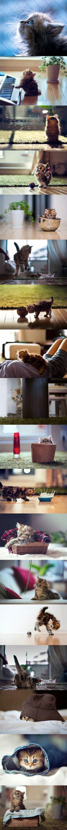 【萌死人不偿命】一位名叫Ben Torode的澳籍日本摄影爱好者用独特的视角为自己的小猫咪黛西拍摄了一组非常可爱的照片。黛西有着蓝色的眼睛,身形也很娇小。在主人的镜头下,黛西或是安静地凝望,或是调皮玩耍,有时也会探着脑袋露出好奇的表情。