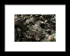 Product Framed Print featuring the photograph Mood Magic by Vanessa Branton