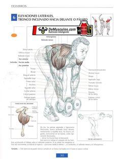 Más ejercicios para hombros... no dejes de visitar www.ejercicios.demusculos.com