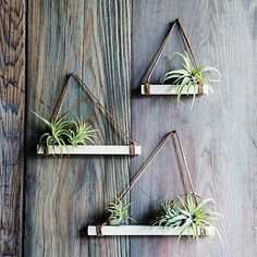 Don't you just love air plants? They are just the most adorable plants are they are of the easiest plants to care for too! Here are Gorgeous Air Plant Display ideas perfect for any home!