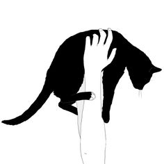 6486 Best Cat Drawing Images Cat Illustrations Drawings Cat