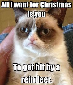 +grumpy cat =