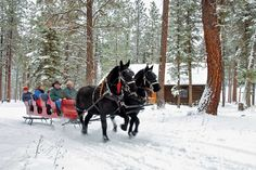 Dashing through the snow...in a two horse open sleigh :) The Resort at Paws Up is located 35 minutes northeast of Missoula, Montana in Greenough—a little town nestled in the heart of the Blackfoot Valley. Paws Up is a Montana ranch resort located on 37,000 acres of pristine Montana wilderness. 10 miles of the Blackfoot River flow right through our property.