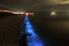 Singly, each individual emits a tiny speck of light, but en masse, they can light up a beach with an eerie other-worldly glow… Can Lights, Light Up, Natural Beauty, Places To Visit, Sparkle, The Incredibles, Sea, Water, Gripe Water