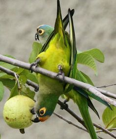 Birds All Birds, Love Birds, Beautiful Birds, Landscaping Ideas, Backyard Landscaping, Conure, Colorful Birds, Hummingbird, Bird Houses