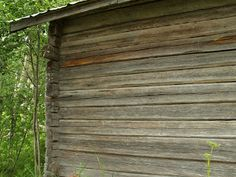 Old sauna's wall