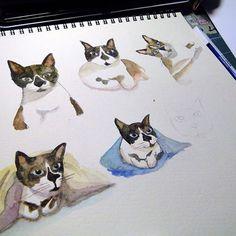 mais gatosmore cats