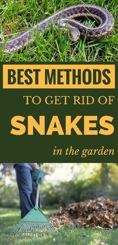 Best methods to get rid of snakes in the garden. Best methods to get rid of snakes in the garden. Garden Snakes, Slugs In Garden, Garden Bugs, Garden Insects, Garden Pests, Lawn And Garden, Garden Tools, Snake Repellant, Duck Weed