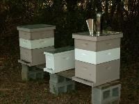 The Advantages of Using Nucs in Beekeeping Operations. Many people keep nucs as support colonies. A good rule of thumb is for every two to three production colonies one has in an apiary, keep one support nuc. The job of the support nuc is to keep the production colonies as strong as possible so they can make as much honey as possible.