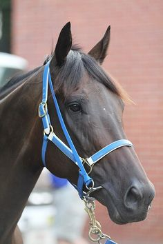 Black Caviar -Champion Australian mare who went 25-25 in her career, unbeaten in 25 starts!