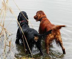 Irish and Gordon.Whaddya think we goin' in??... - via Mavis Sullivan