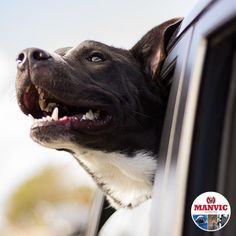 It is crucial to plan for fuel and rest points along your route. This is helpful when traveling with kids and pets so you can get out to stretch some legs and not get stranded with an empty tank in the middle of nowhere.  #ArriveAlive #SafetyTips #Manvics Funny Dog Memes, Funny Dogs, Cute Dogs, Fear Of Dogs, Tallest Dog, Group Of Dogs, Dog Facts, Dog Selfie, Dog Fighting