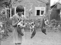"""""""A little girl hangs three Siamese kittens on a washing line in a garden in Croydon, London. (Photo by Fox Photos/Getty Images). 14th July 1931"""""""