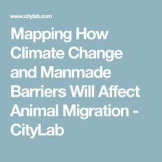 Mapping How Climate Change and Manmade Barriers Will Affect Animal Migration - CityLab