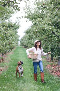 It has been fun having Chad's dog Pete here for a few days, he is helping me pick apples. I am going to make my first apple pie today. Apple Orchard Photography, Jillian Harris, Dog Houses, Country Life, Family Photos, Autumn Fashion, Green Fashion, Cute Animals, Fall Winter