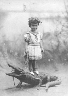 pet crocodillo