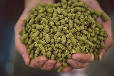 If beer was a band - hops would definitely be the lead singer!
