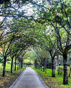 Dikmen Vadisi @Ankara Tebrikler! Fotoğraf Sahibi:... Ankara, Capital City, Sidewalk, Country Roads, Wallpaper, Places, Garden, Anime, Photography