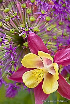 Colorburst by Gary Grossman, via Flickr