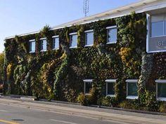"""O jardim da biblioteca. O Canadá também abriga uma das maiores paredes """"verdes"""" do continente americano. Trata-se do jardim vertical de Whit..."""