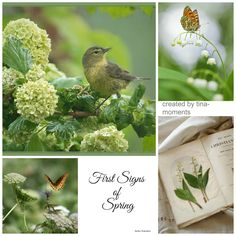 First Signs Of Spring Collage Spring Is Here, Hello Spring, Collages, Beautiful Collage, Spring Sign, Spring Has Sprung, Lily Of The Valley, Spring Green, Color Pallets