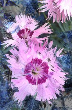 Vintage floral, efecto sketch                 Fotografía original       Composición Digital .- Matte Painting. Floral