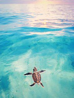 the little cutiepie. #islandlife #turtle #ocean