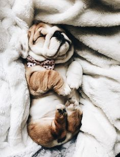 VSCO mackenzieconricode Collection is part of Cute baby animals - Cute Funny Animals, Cute Baby Animals, Animals And Pets, Nature Animals, Wild Animals, Cute Dogs And Puppies, I Love Dogs, Doggies, Cute Creatures
