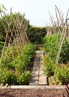 love these teepee type trellises