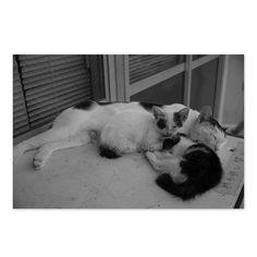 https://flic.kr/p/xgaYbo   Deconditioning Q and Kitty August 2015  #cat #smallcats #blackandwhitephotography