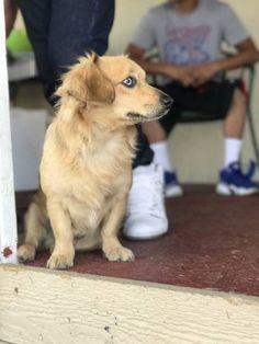 LOST DOG: 07/21/2017 - Sun Valley, Nevada, NV, United States. Ref#: L33828 - #CritterAlert #LostPet #LostDog #MissingDog