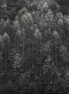 One of Ansel Adams photos from his time in the Great Smoky Mountains. You can see one at the Knoxville Museum of Art.