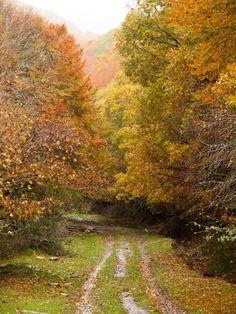 Autumnal way
