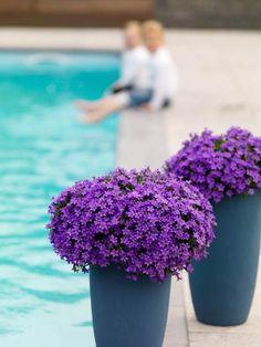 Zamilujte si zvonky Campanula Addenda: hodí se do moderních i tradičních zahradních a balkonových kompozic!  |  Moda.sk