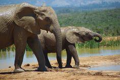Love Elephants...