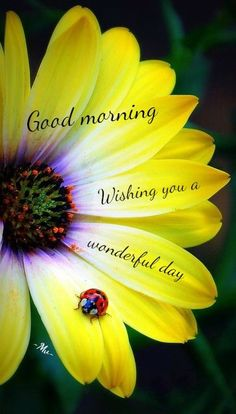 Good Morning Wishing You A Wonderful Day Flower Quote                                                                                                                                                                                 More