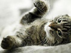 Feline Fact and Fiction