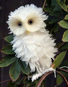 Cute! Looks like a feather -duster with eyes! Owl, Birds, Animals, Animales, Animaux, Owls, Animal, Bird, Dieren