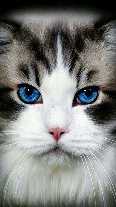Splendido esemplare di felino