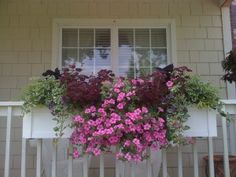 We purchased our box from Hooks and Lattice three years ago and have loved it. Its the focal point of our small yard. Its full of petunias and different vines and coleus this summer. Window Boxes Summer, Window Box Flowers, Flower Boxes, Flower Containers, Flower Ideas, Railing Planters, Aspen House, Window Planter Boxes, Garden Windows